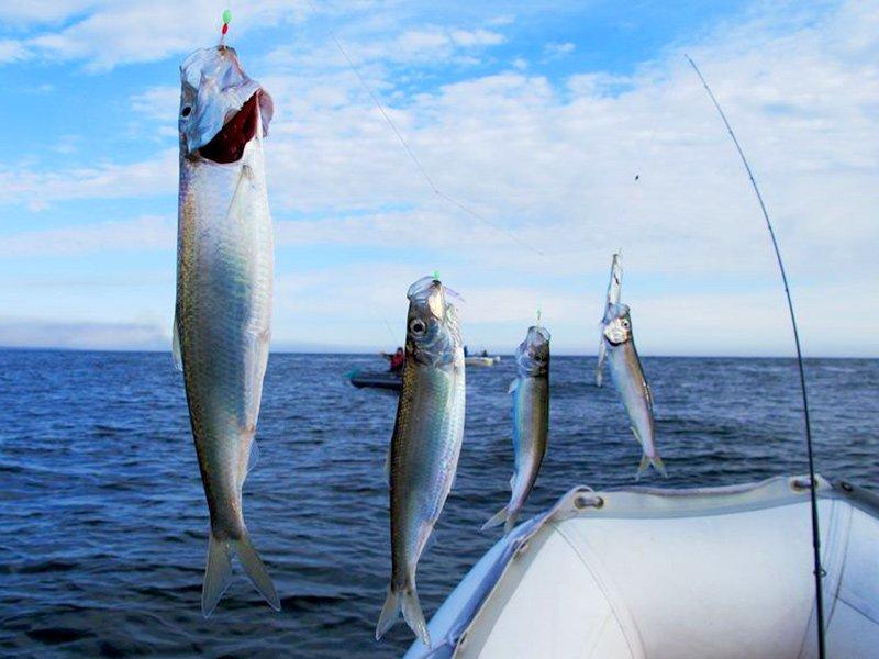 днестровский лиман рыбалка